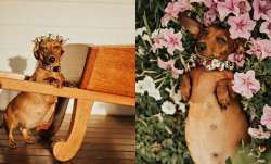 Cindi's maternity shoot