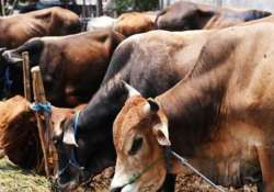 Govt sets up panel for research on benefits of cow
