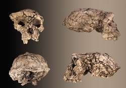 fossilised skull of young ape unearthed in china