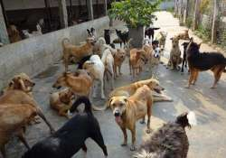 export stray dog meat to china kerala gram panchayats