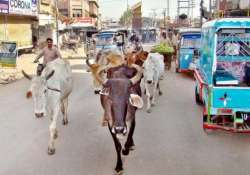 hyderabad police warns against cow slaughter on bakrid- India Tv