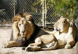10 things not to do when you enter a zoo