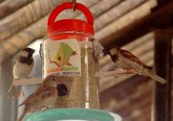 sparrows to get nest at government buildings in bihar