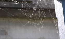 Vastu Tips: Know why spider web is considered inauspicious and should be cleaned immediately