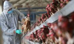 Czech Republic confirms second bird flu outbreak; will cull