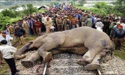 Elephant killed by speeding train in Jharkhand