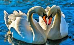 Vastu Tips: Keep picture of swan in bedroom for a happy married life
