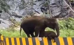 Heartwarming video shows mother elephant helping calf cross