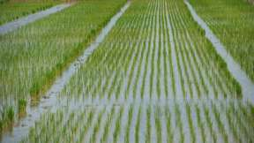 China has placed order for non-basmati rice from India