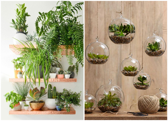 Home Design Ideas Easy: Decorate Your Home With Indoor Plants, 5 Easy Home Decor